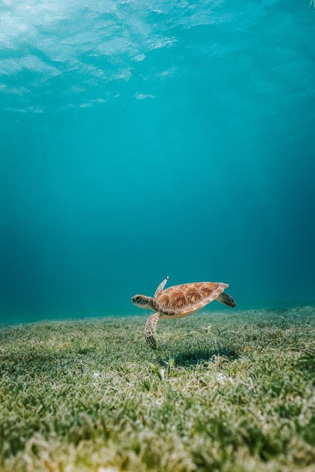 Aruba tortue liste pays inconnu