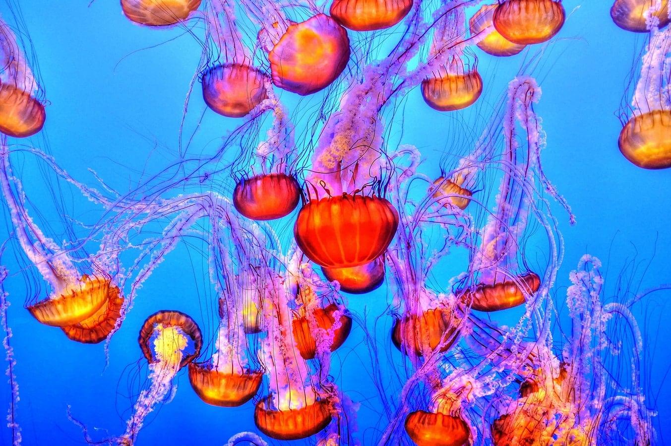 Palaos lac aux méduses pays inconnu océanie