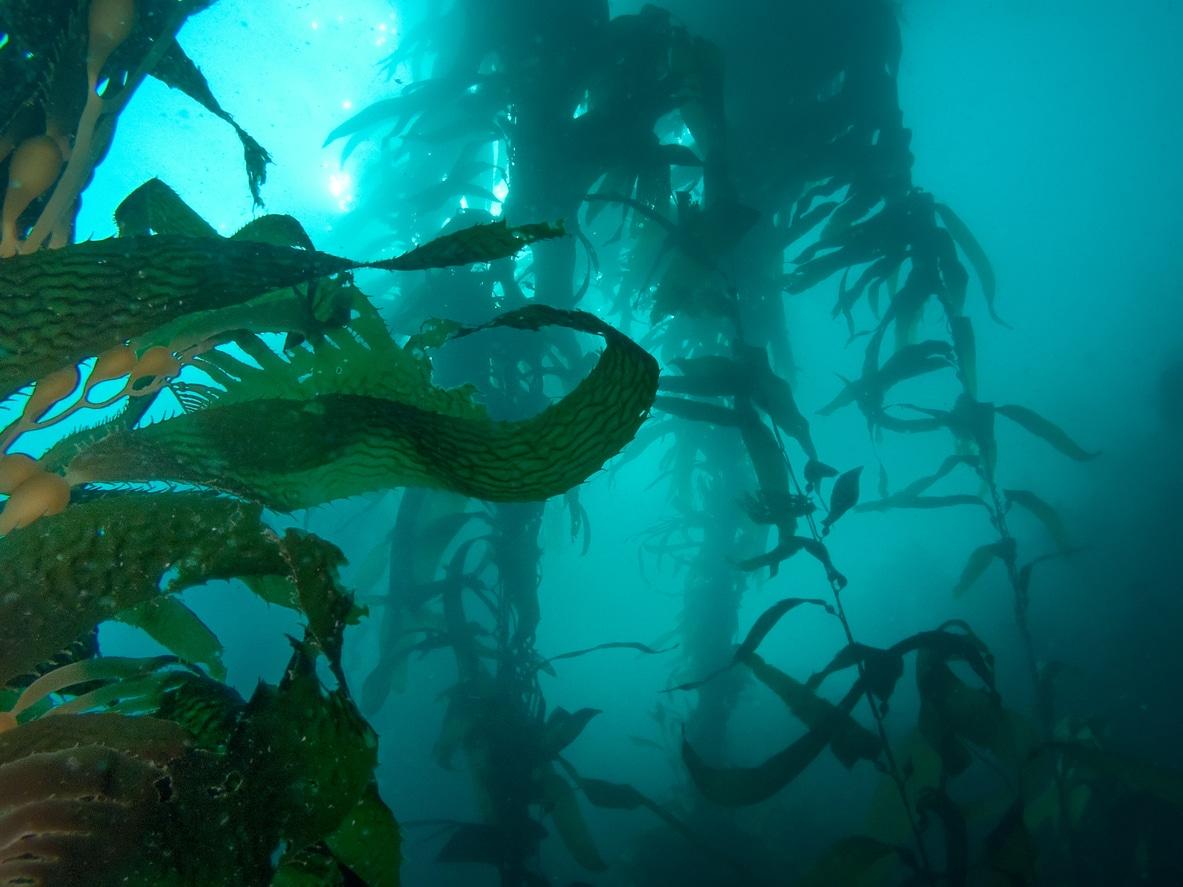 histoire terrifiantes océan algues