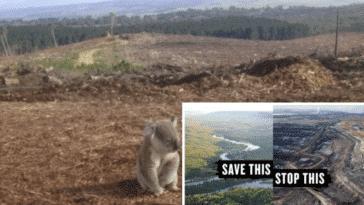 déforestation outrance déboisement