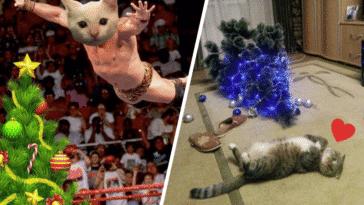 chats sapins de Noël félins catastrophes désastres