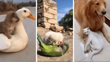 complicité amitié animaux chiens chats oiseaux