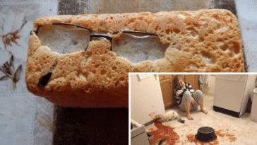cuisiniers pas doués échec cuisine fails