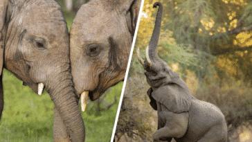éléphants choses fascinantes incroyables facettes trompes intelligence