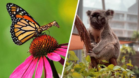 animaux redit hybrides bizarres étranges montage Photoshop