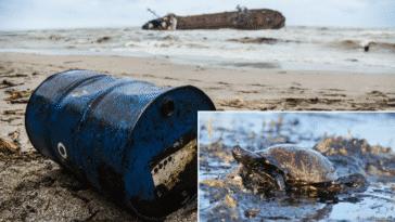 pires marées noires histoire mer océan accidents écologiques nappes industriels hydrocarbures
