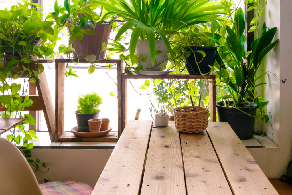 déco intérieur écologie plantes vertes