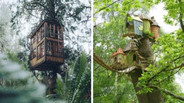 cabanes forêts bois arbres palmiers enfance enfants