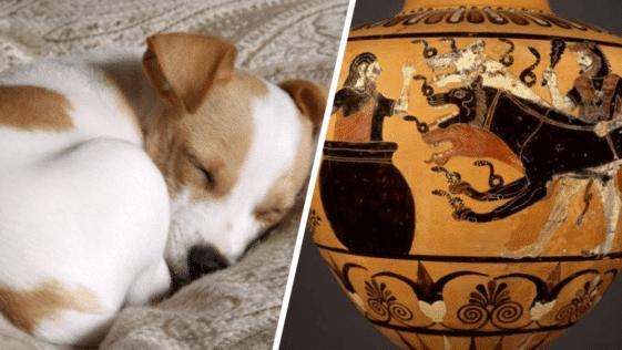 faits étonnants insoupçonnées chiens meilleur ami humain