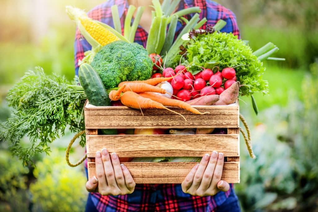 conseils pour adopter une alimentation écologique
