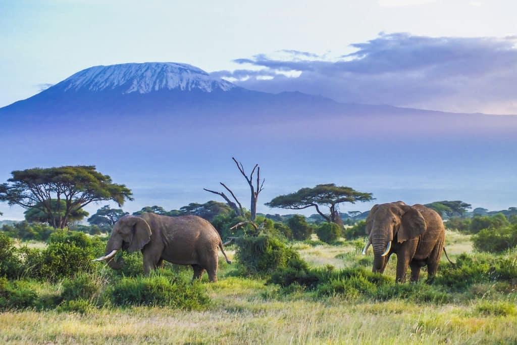 séjour covid vacances vaccinés Kenya safari sanitaire