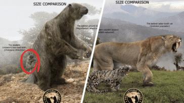 animaux préhistoriques comparaisons tailles