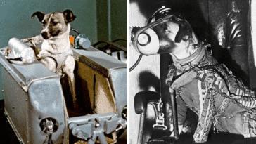 Laïka animal espace chienne exploration spatiale