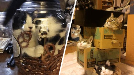 chats boîtes