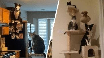 chiens prennent pour des chats
