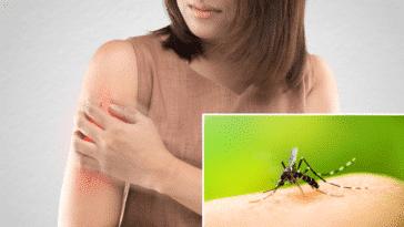 maladies moustiques piqûres dangereuses